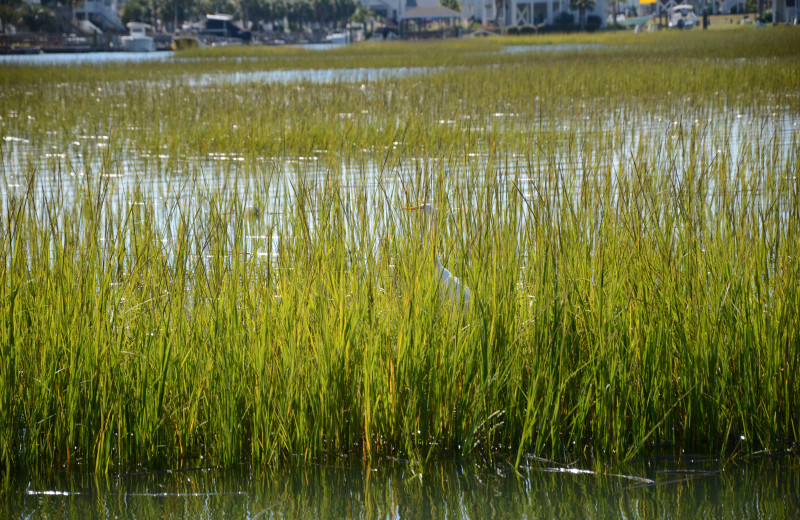 Grasses at Williamson Realty Vacations.