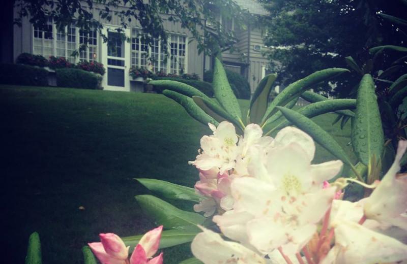 Spring at The Greystone Inn.