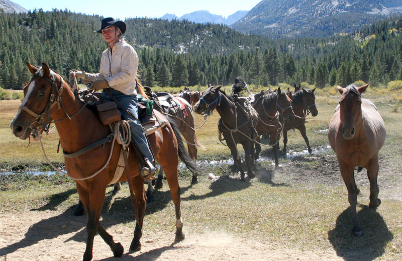 Horseback riding at Rock Creek Lodge.