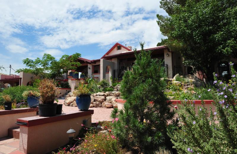 Garden at Calumet & Arizona Guest House.