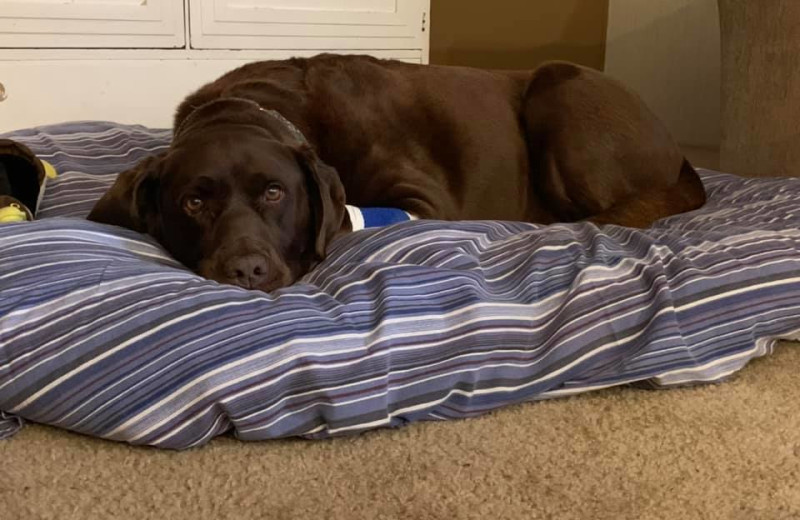 Pets welcome at River Bend's Resort & Walleye Inn.