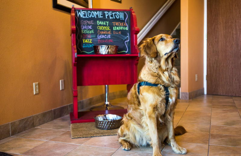 Pets welcome at Hallmark Resort & Spa Cannon Beach.