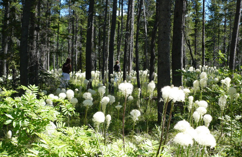 Bear Grass bloom in the forest at Rising Wolf Ranch.