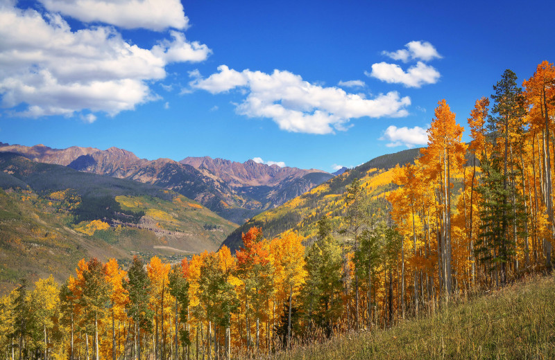 Fall colors at Vail Run Resort.