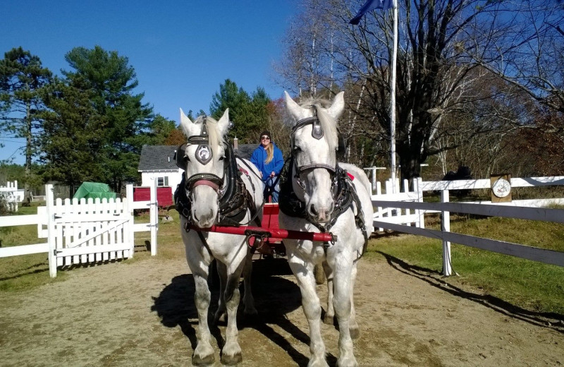 Horse carriage ride at Farm by the River Bed & Breakfast.