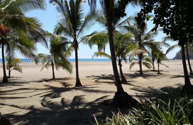 Beach at Hotel Pochote Grande.