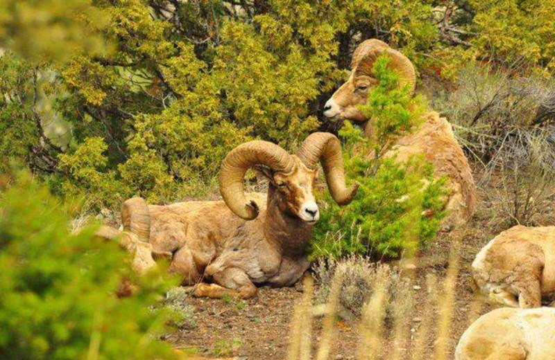 Sheep near 7 Point Ranch.