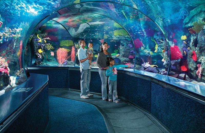 Aquarium near Caribbean Resort & Villas.