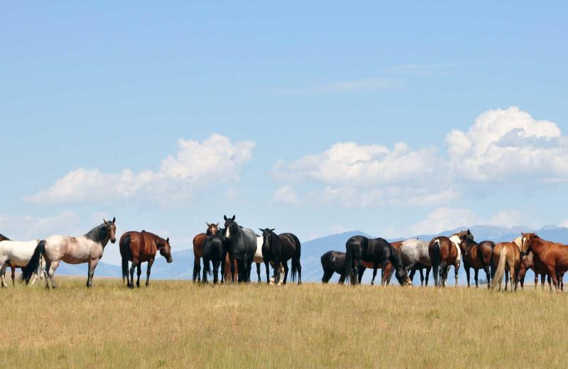 Horses at Hardscabble Ranch.