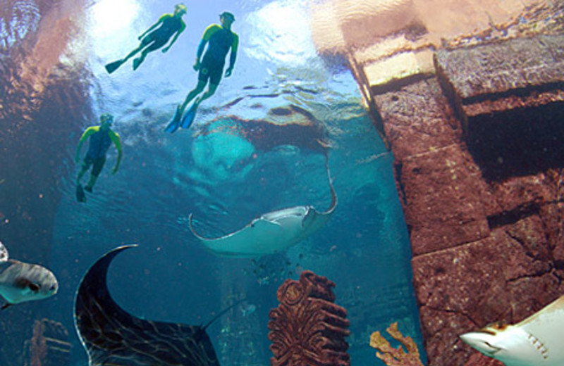 Diving at Atlantis, Paradise Island - Beach Tower.
