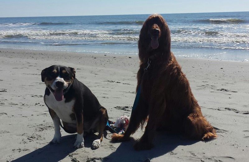 Pets welcome at Vacation Rentals Folly Beach.