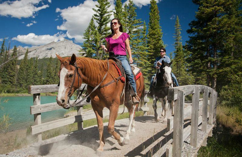 Horesback riding at Banff Trail Riders.