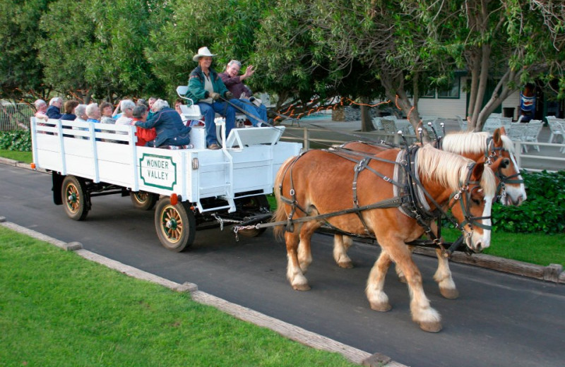 Hayrides at Wonder Valley Ranch Resort