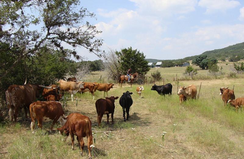 Pasture at Rancho Cortez.