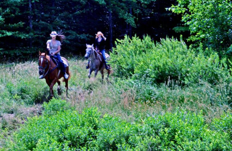 Horseback riding near Timberline Mountain-Access Properties.