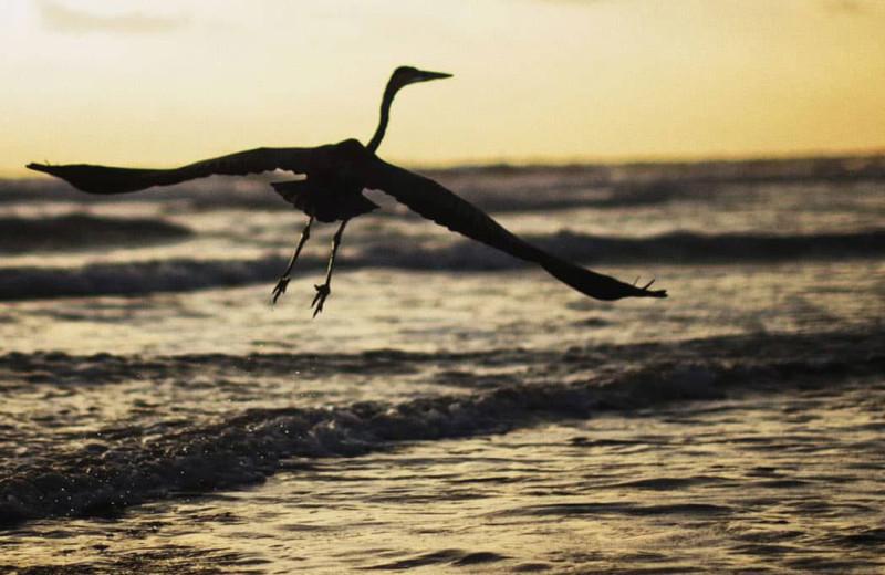 Bird at Seabreeze I.