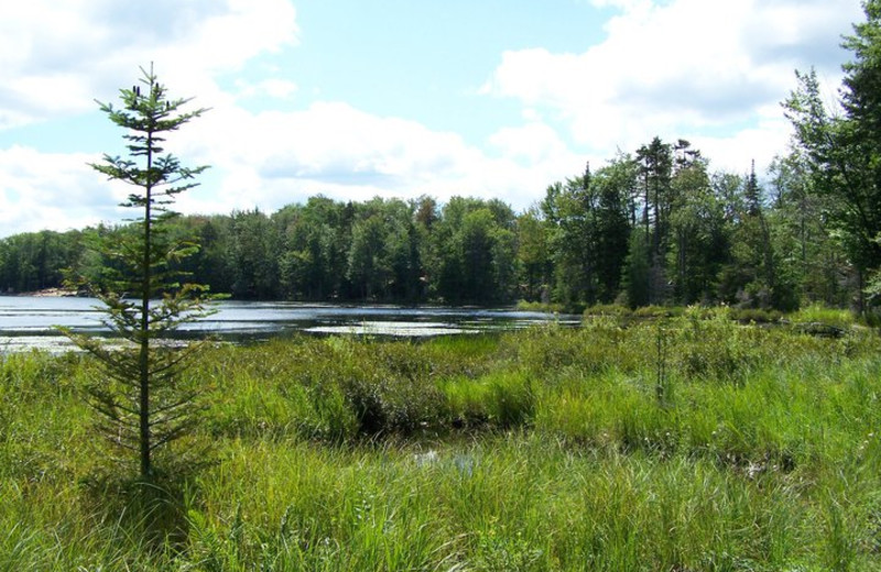 Nature trails at Old Forge Camping Resort.