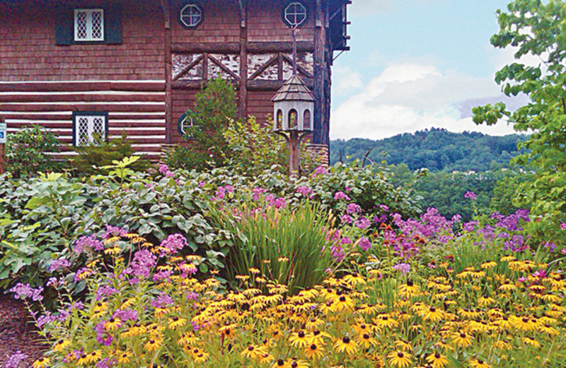 Wildflowers at The Lodge at Buckberry Creek