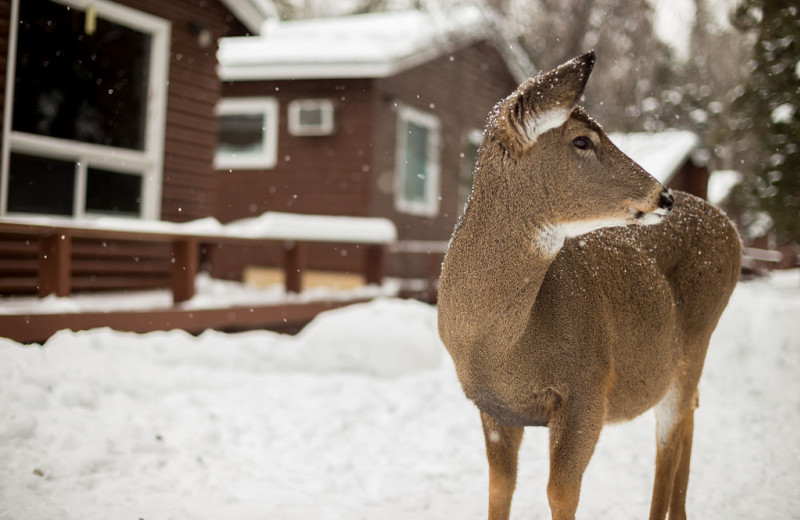 Winter time at Tallpine Lodges.