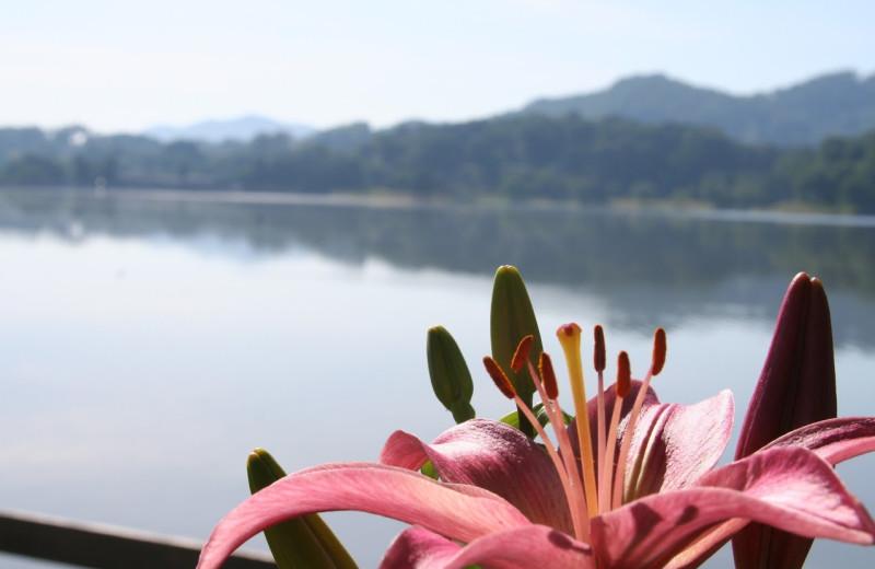 Lake view at Lake Junaluska Conference and Retreat Center.