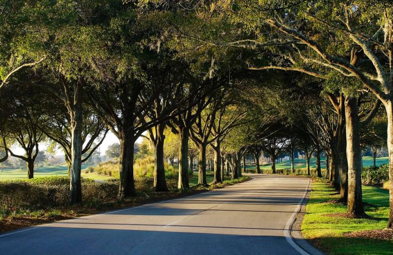 Path at Villas of Grand Cypress.