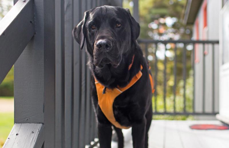 Pets welcome at Sebasco Harbor Resort.