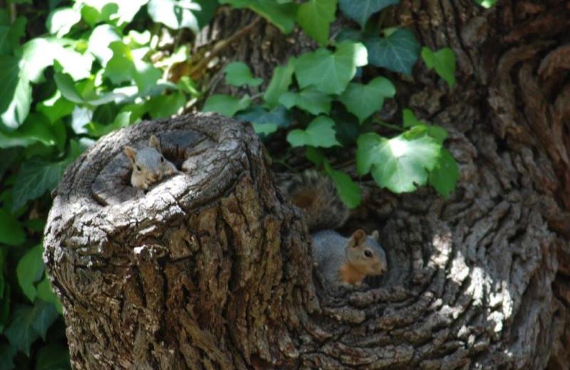 Squirrels at Fredericksburg Ranch.