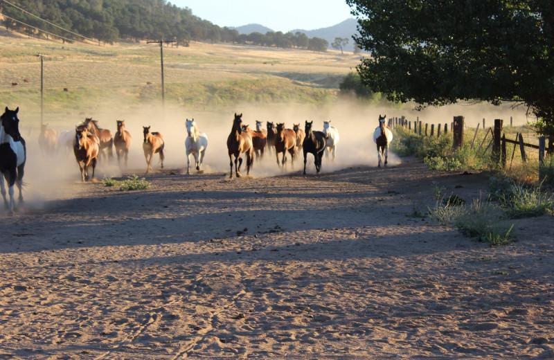 Horses running at Rankin Ranch.