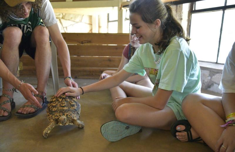 Animal education at Mo-Ranch.