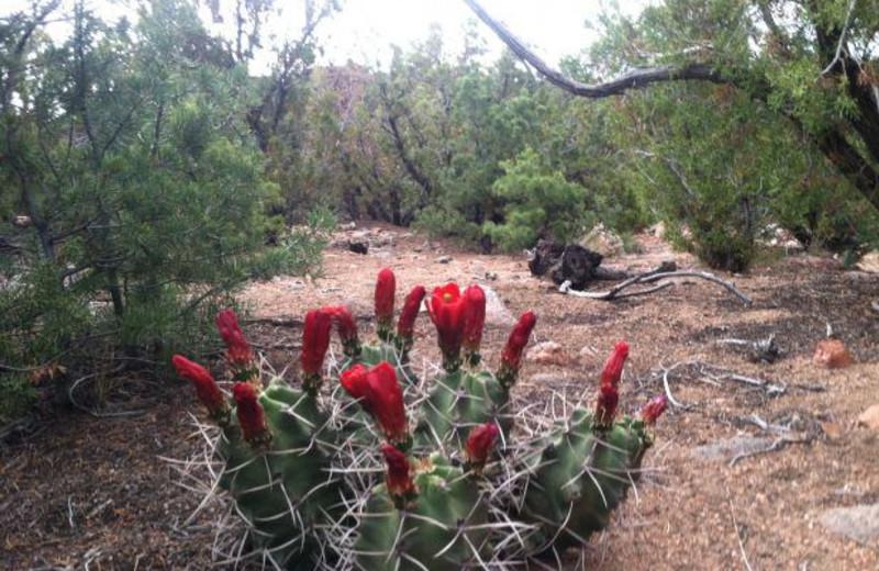 Santa Fe Desert at Inn of the Governors