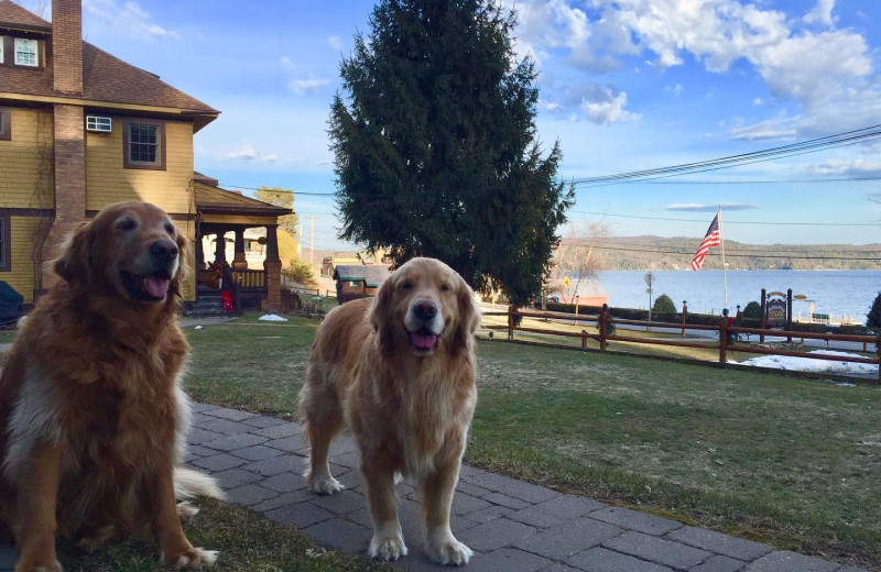 Pets welcome at Trout House Village Resort.