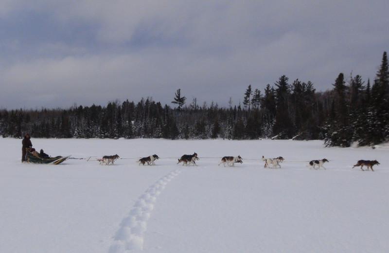 Dog sledding at Loon Lake Lodge.