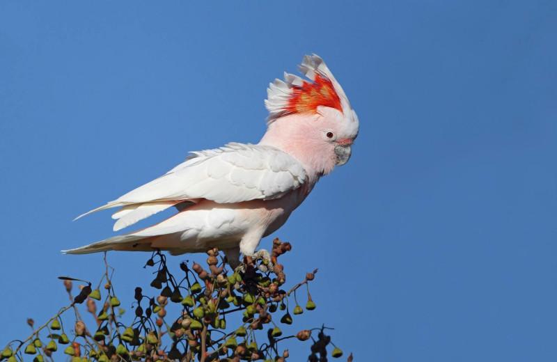 Bird watching at Eyre Bird Observatory.