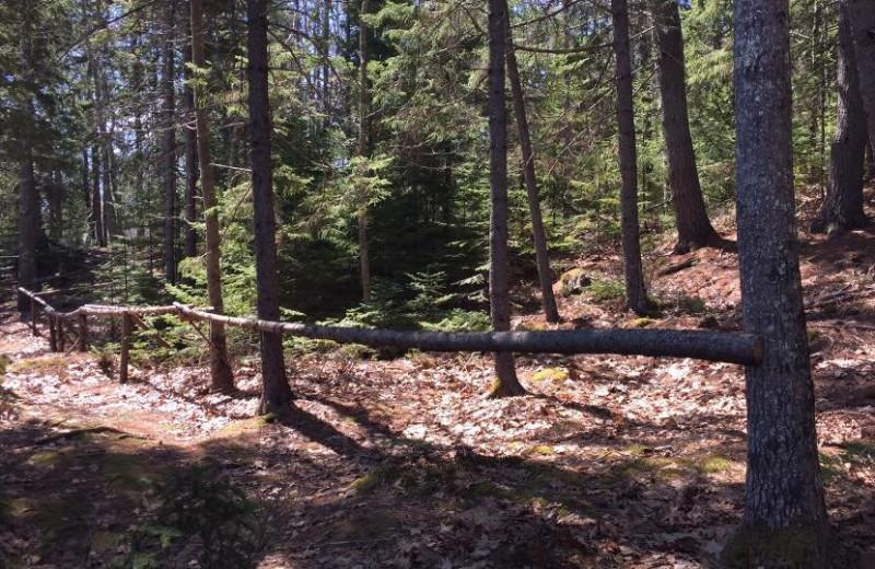 Nature path at Mount Battie Motel.