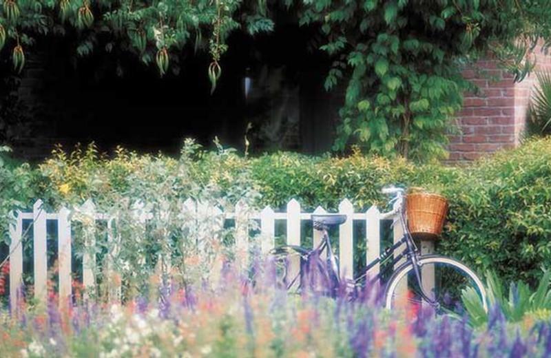 Garden view at Vintage Inn.