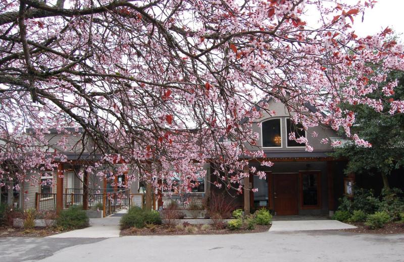 Spring blossoms at Mayne Island Resort and Spa.