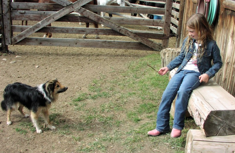 Cattle dog at Vee-Bar Guest Ranch.