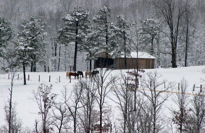 Horses near Saddleback Lodge.