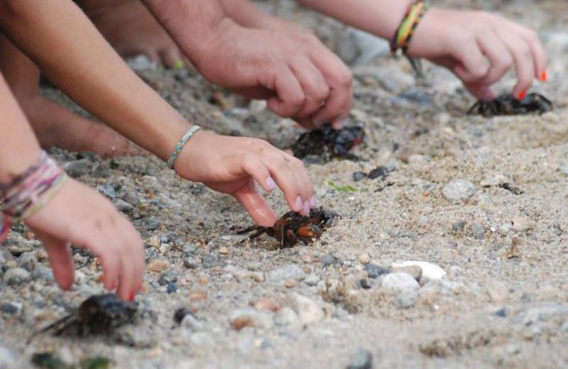 Crabs at Hawk's Nest Beach.