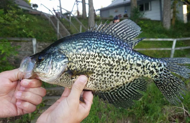 Fishing at Long Lake Resort.