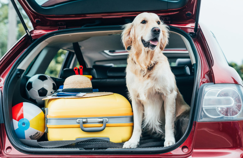 Pets welcome at Chateau Resort and Conference Center.