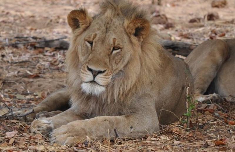 Nature safaris at Muchenje Safari Lodge.