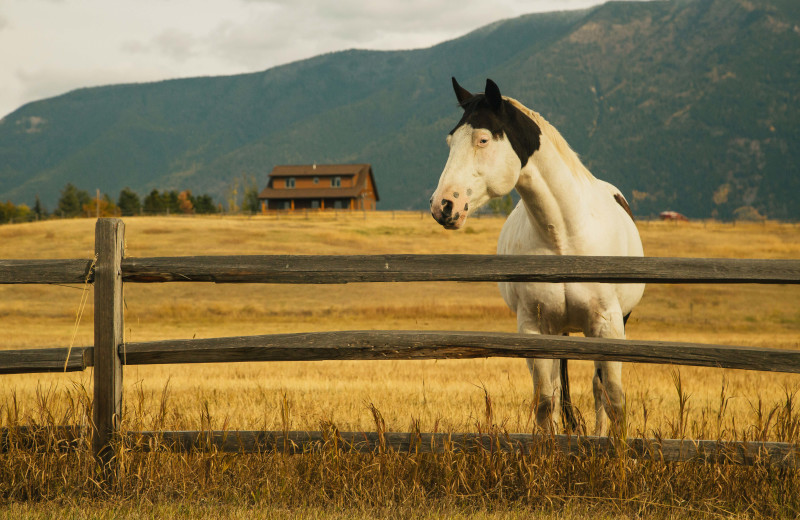 Horse at Gentry River Ranch.