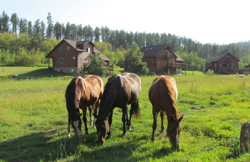 Horses grazing at High Country Guest Ranch.