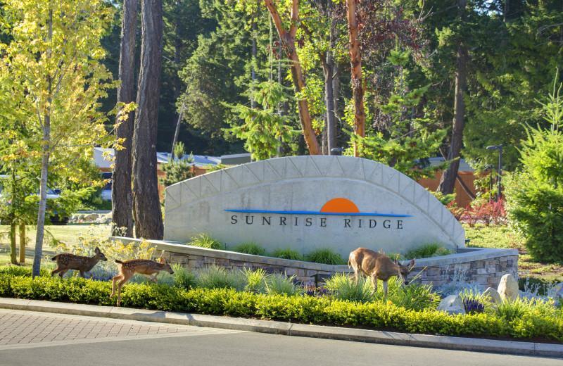 Welcome to Sunrise Ridge Waterfront Resort.