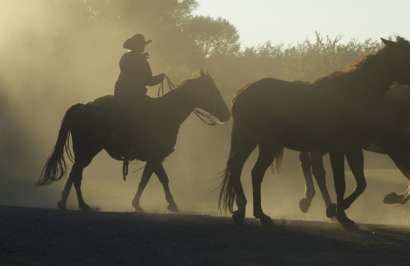 Horseback riding at Vee Bar Guest Ranch.