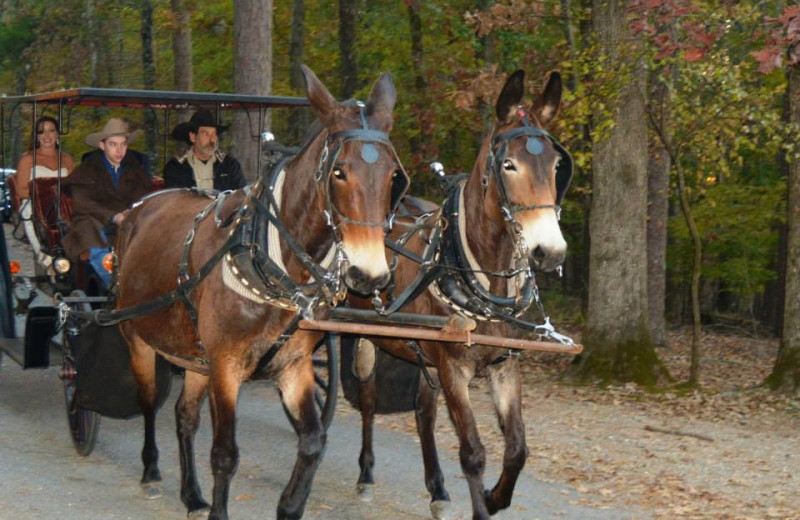 Wedding carriage at Mountain Harbor Resort & Spa.