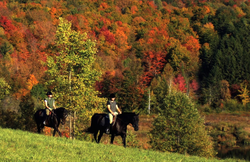 Horseback riding at Stowe Country Homes.