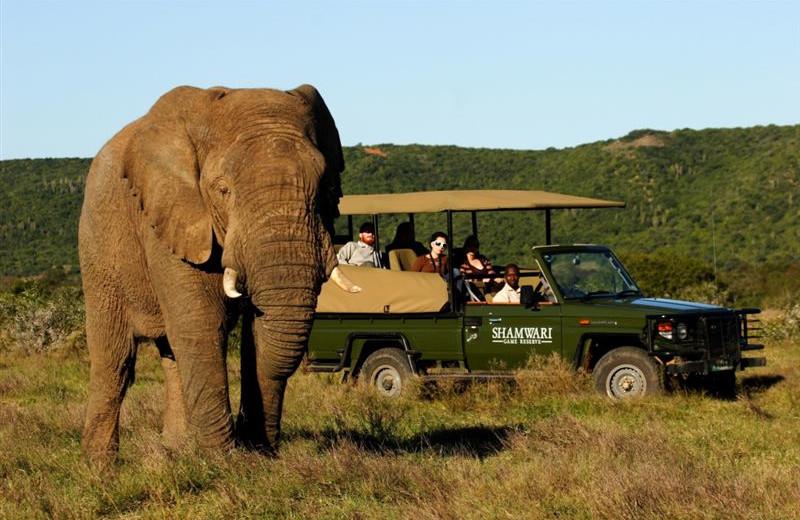 Safaris at Shamwari Game Reserve.