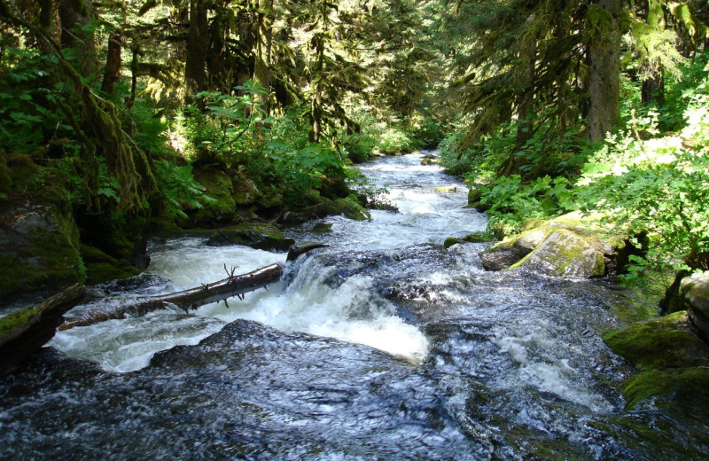 Stream at Afognak Wilderness Lodge.